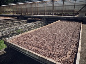 2015-02-Grenada-Chocolate-Company 097